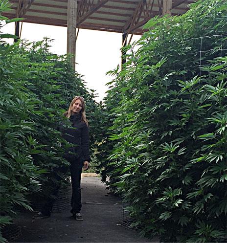 Marijuana Soil Cannabis Soil CannaSoil®